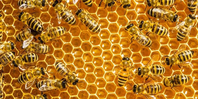 μελισσες Bees_110