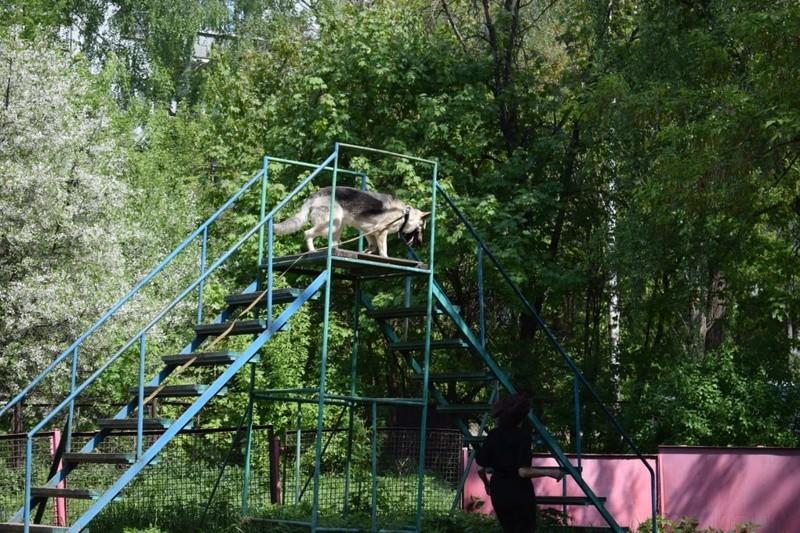 ВОСТОЧНО-ЕВРОПЕЙСКАЯ ОВЧАРКА ВЕОЛАР ЖЕННИ - Страница 2 Img-2014