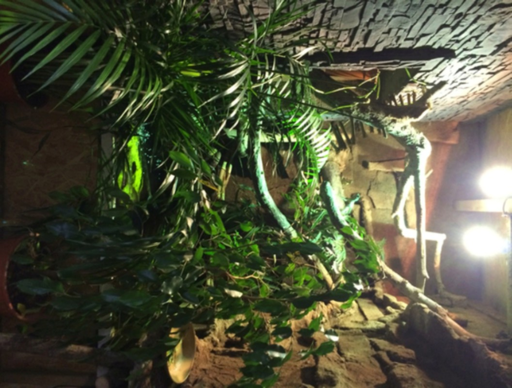 Hydrosaurus weberi  E86a9210