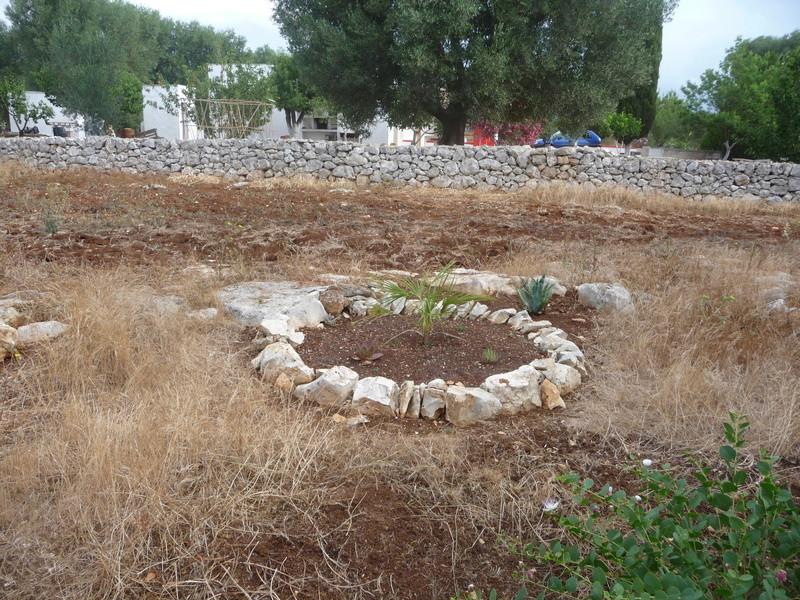 Aus einer Wüste entsteht ein Exotengarten 03_07_10