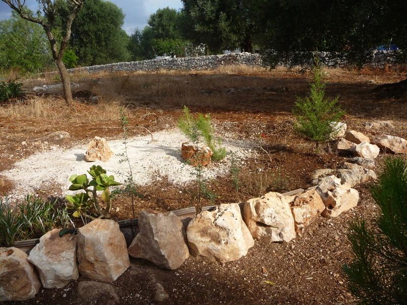Aus einer Wüste entsteht ein Exotengarten 03_07_11