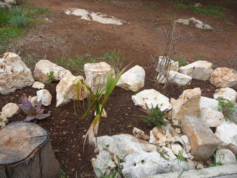 Aus einer Wüste entsteht ein Exotengarten 06_04_10
