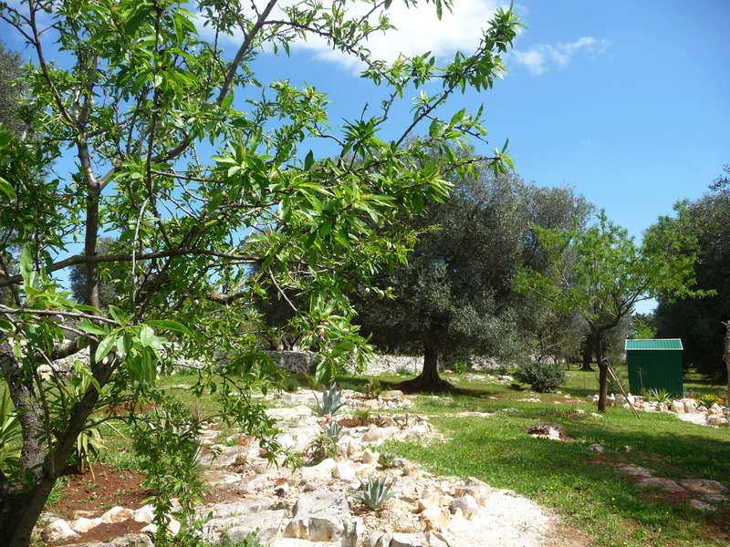 Aus einer Wüste entsteht ein Exotengarten 07_04_11