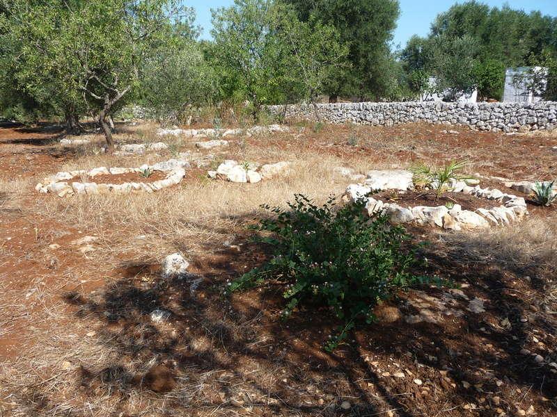 Aus einer Wüste entsteht ein Exotengarten 10_07_11