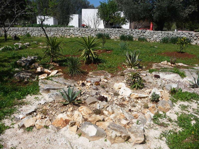Aus einer Wüste entsteht ein Exotengarten 6_04_210