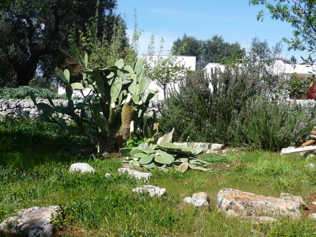 Aus einer Wüste entsteht ein Exotengarten P1020310