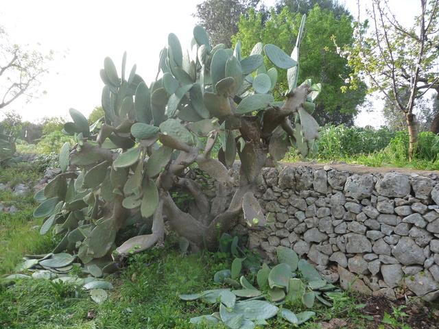 Aus einer Wüste entsteht ein Exotengarten P1020311