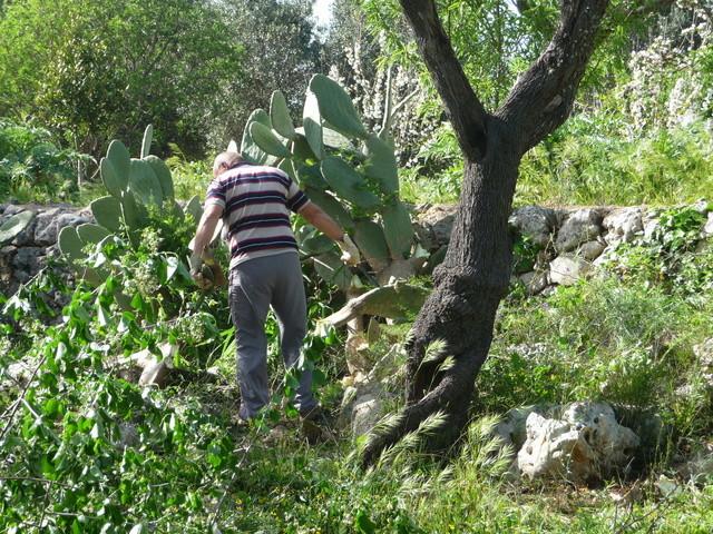 Aus einer Wüste entsteht ein Exotengarten P1020312