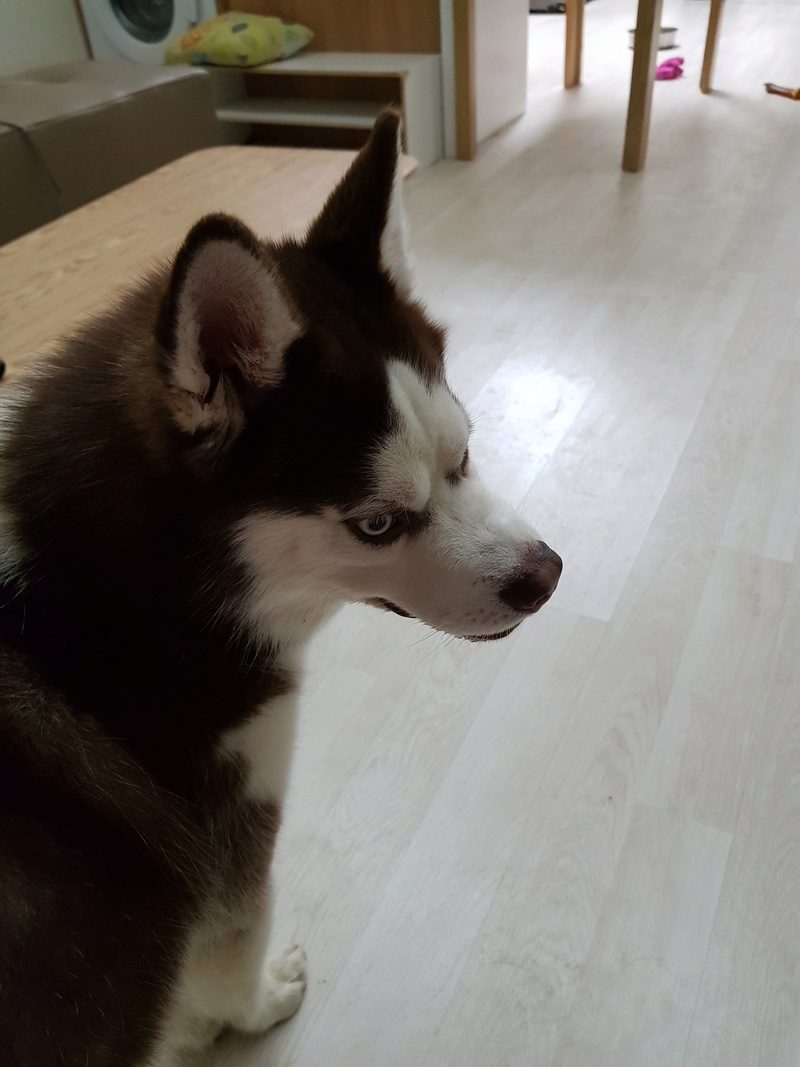 Opinions on Husky 20180212