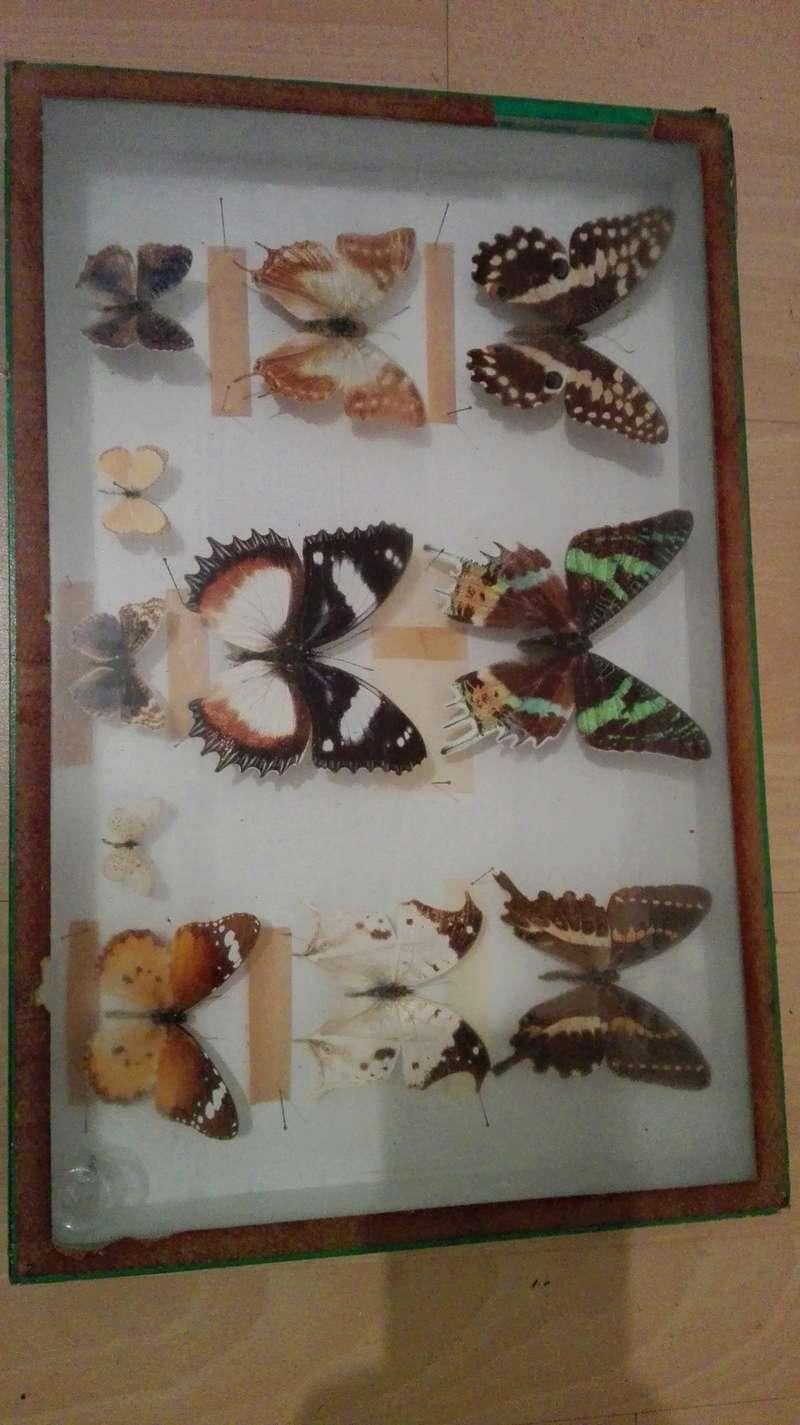 Estimation papillons sous verre Img_2011
