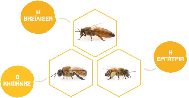 Η κοινωνία των μελισσών Bees110