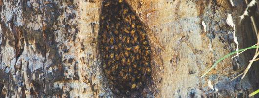 Η κοινωνία των μελισσών Koin-010
