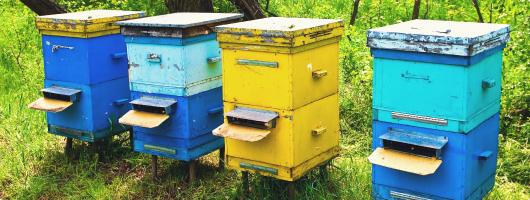 Η κοινωνία των μελισσών Koin-011
