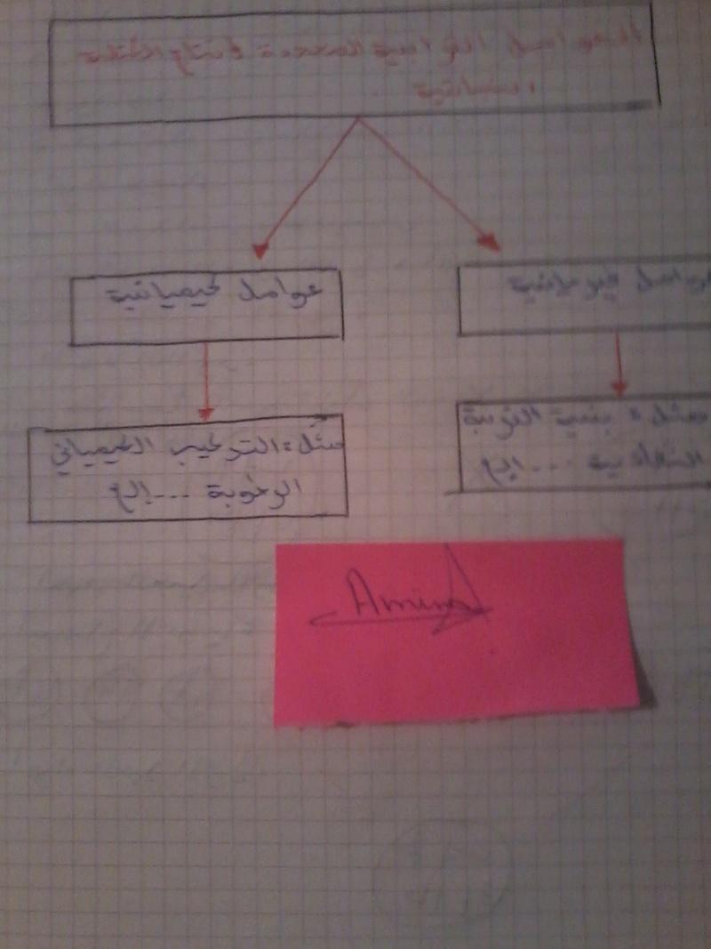 شرح مبسط لدرس :العوامل الداخلية المؤثرة على انتاج الكتلة الحيوية 00811