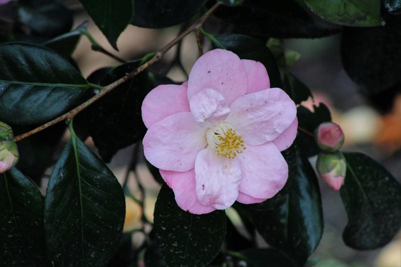 Thème du mois d'avril 2018 :  Passion, fleur ... fleurie !  115