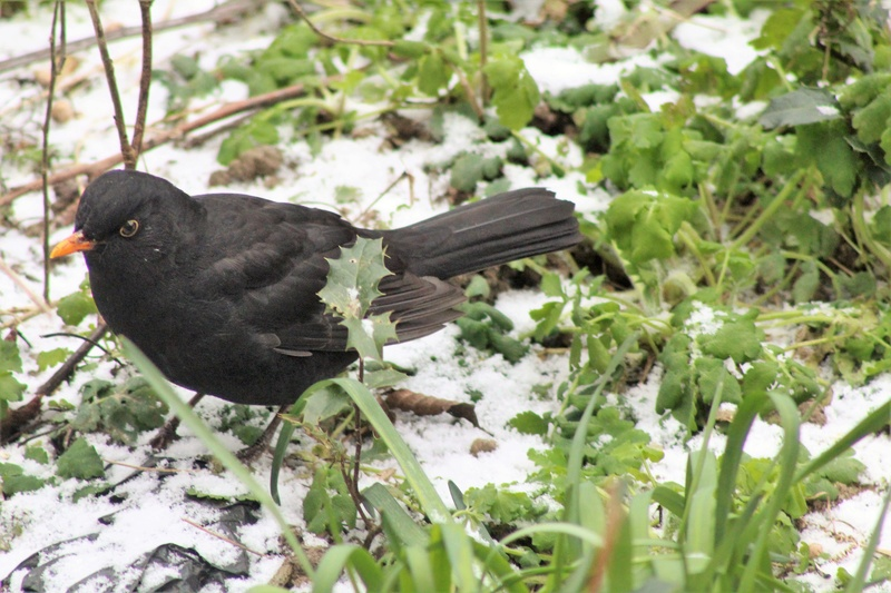 [Ouvert] FIL - Oiseaux. - Page 11 3910
