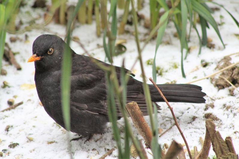 [Ouvert] FIL - Oiseaux. - Page 11 4010