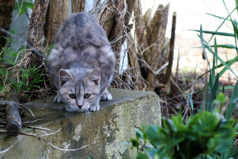 [fil ouvert] Les chats  - Page 7 7811