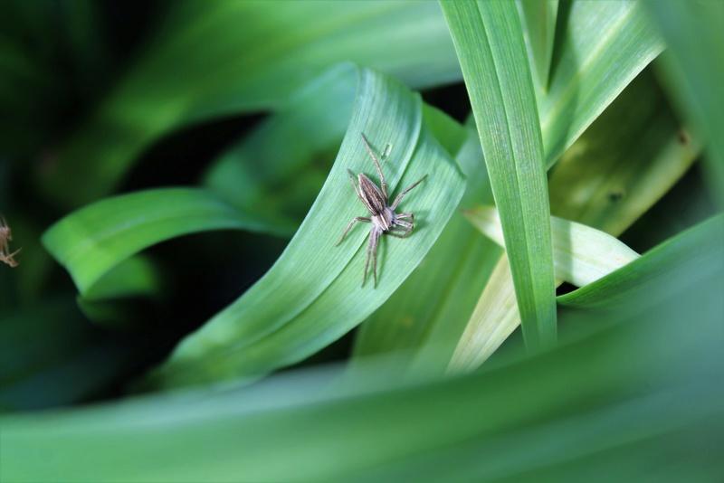 (FIL OUVERT à tous) vous aimez les araignées? - Page 5 Img_7521