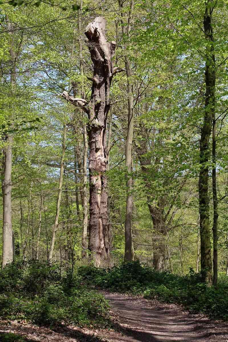 [fil ouvert] la forêt dans tous ses états - Page 19 Img_7726