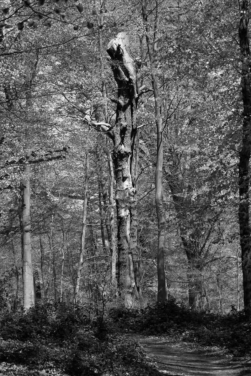 [fil ouvert] la forêt dans tous ses états - Page 19 Img_7727