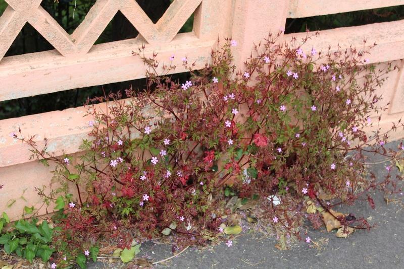 [Fil ouvert] Fleurs et plantes - Page 9 Img_8819