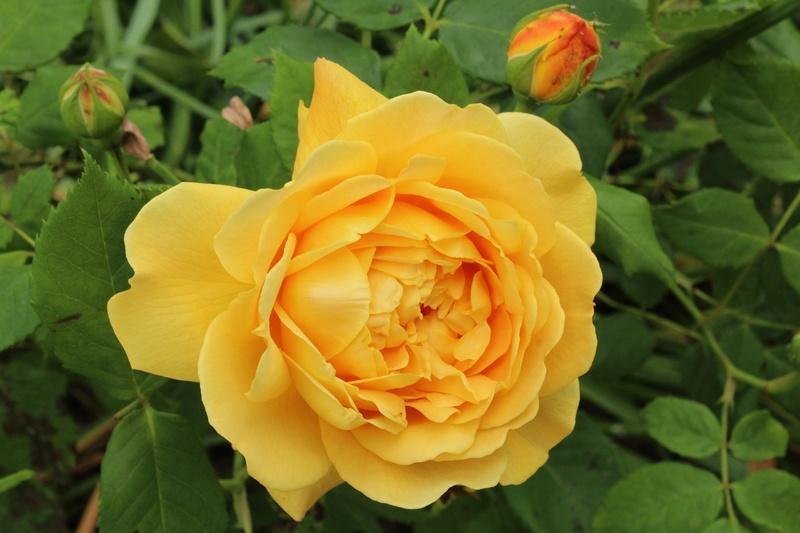 [Fil ouvert] Fleurs et plantes - Page 9 Img_8910