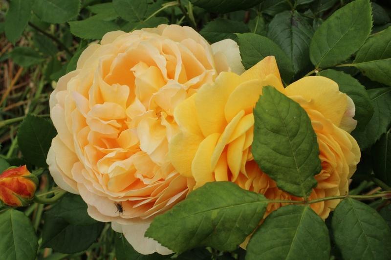 [Fil ouvert] Fleurs et plantes - Page 9 Img_8911