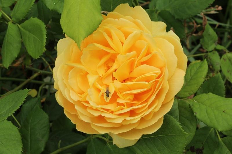 [Fil ouvert] Fleurs et plantes - Page 9 Img_8912