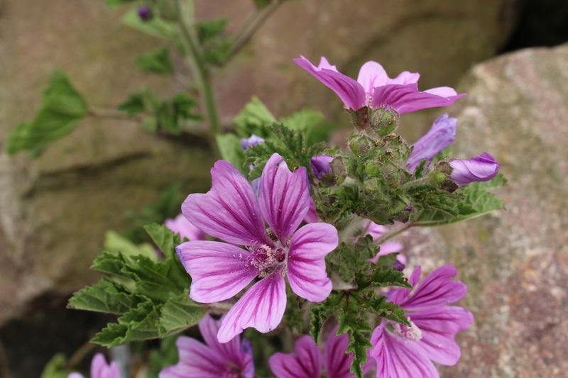 [Fil ouvert] Fleurs et plantes - Page 9 Img_8914