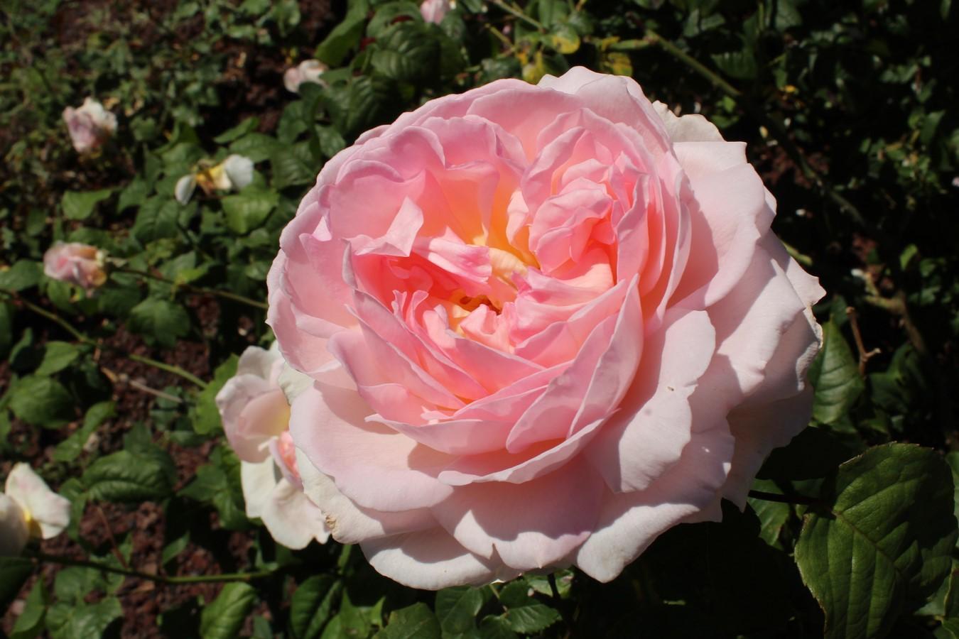 [Fil Ouvert] Fleurs - Page 21 Img_9026