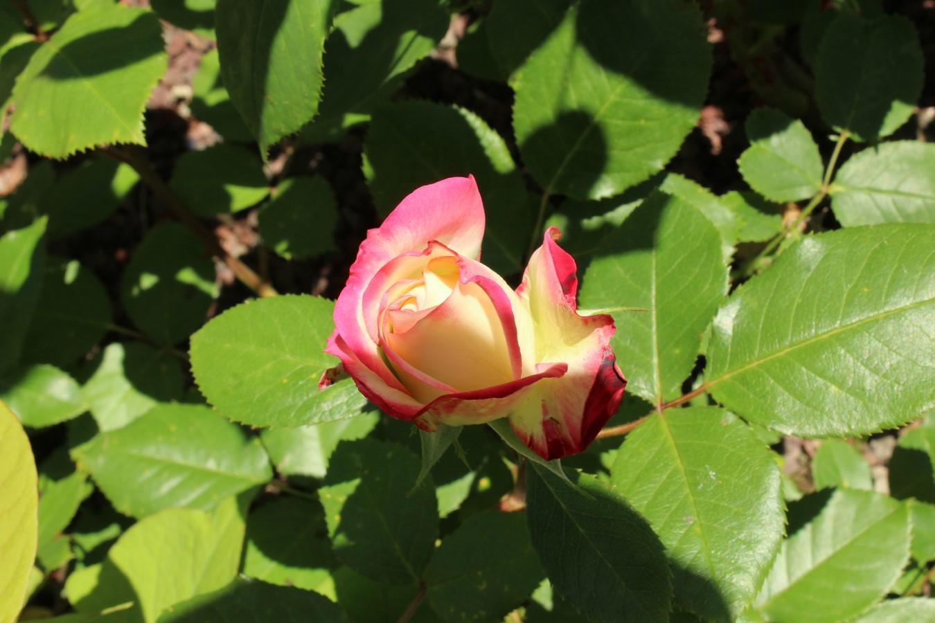 [Fil Ouvert] Fleurs - Page 21 Img_9029