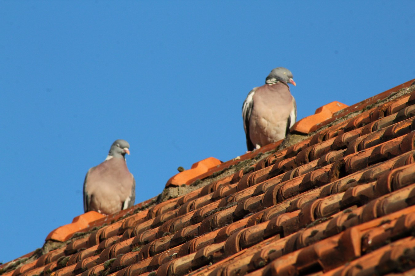 [Ouvert] FIL - Oiseaux. - Page 14 Img_9123