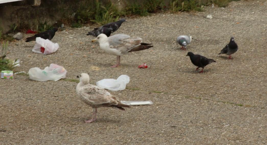[Ouvert] FIL - Oiseaux. - Page 14 Img_9211