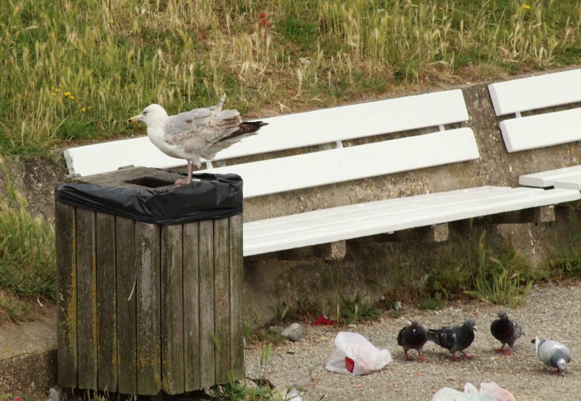 [Ouvert] FIL - Oiseaux. - Page 14 Img_9212