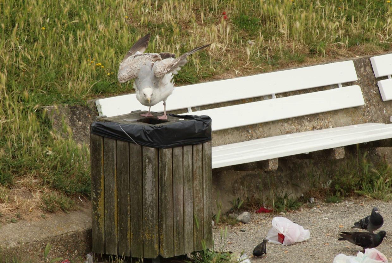 [Ouvert] FIL - Oiseaux. - Page 14 Img_9213