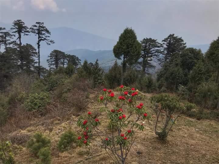 বাংলাদেশ থেকে ভুটান ভ্রমণের প্রয়োজনীয় তথ্য Bhutan trip from Bangladesh complete Guide Fb_im172