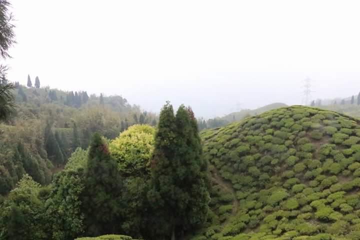 Darjeeling from Bangladesh দার্জিলিং ভ্রমন ঢাকা থেকে Fb_im215