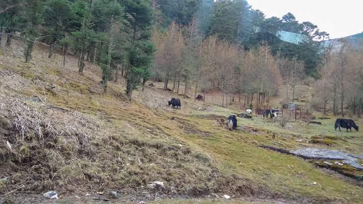 বাংলাদেশ ভুটান ভ্রমন গাইড Bangladesh Bhutan Tour Guide Fb_im226