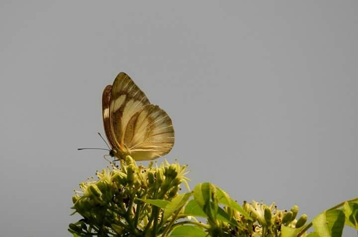 উত্তরবঙ্গ ভ্রমণ : : পেডং  Img_2011