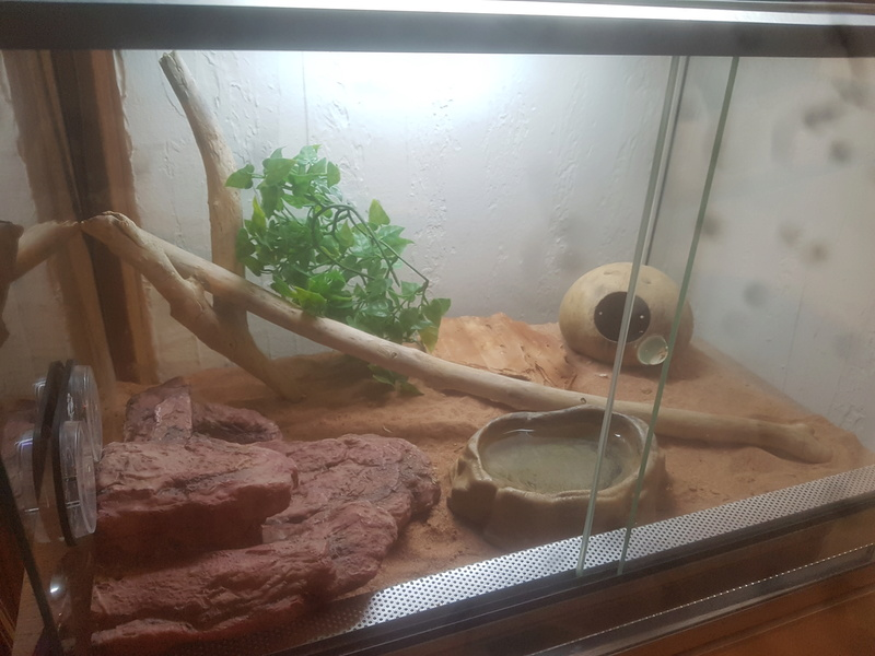 Terrarium de mon gecko léopard  20180310