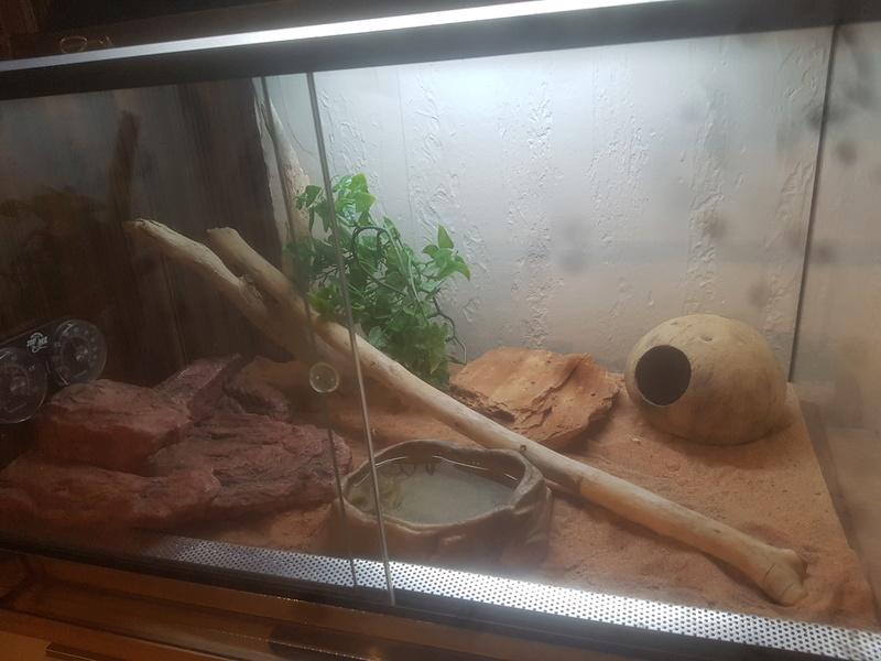 Terrarium de mon gecko léopard  20180311
