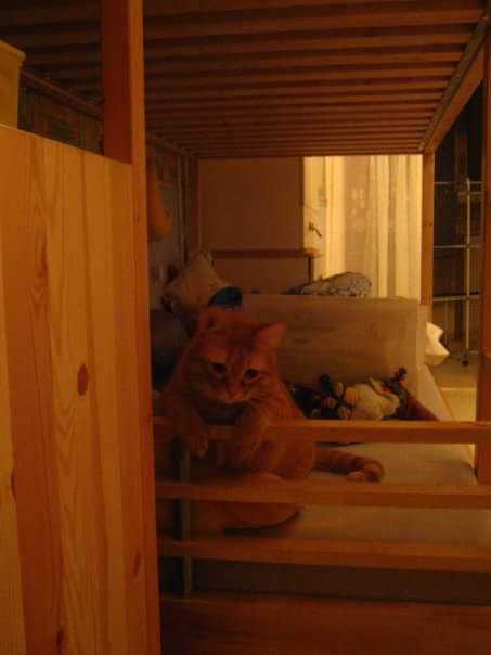 Condividete le foto dei vostri amici animali - Pagina 3 Fb_img14