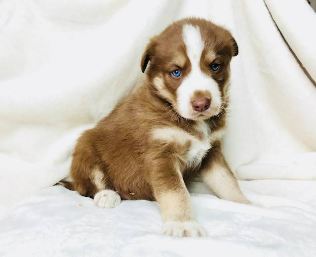 Concerned about our puppy.  391aec10