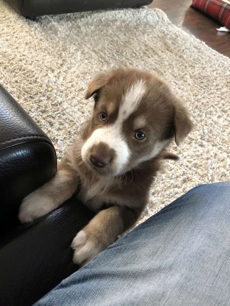 Concerned about our puppy.  F1243610