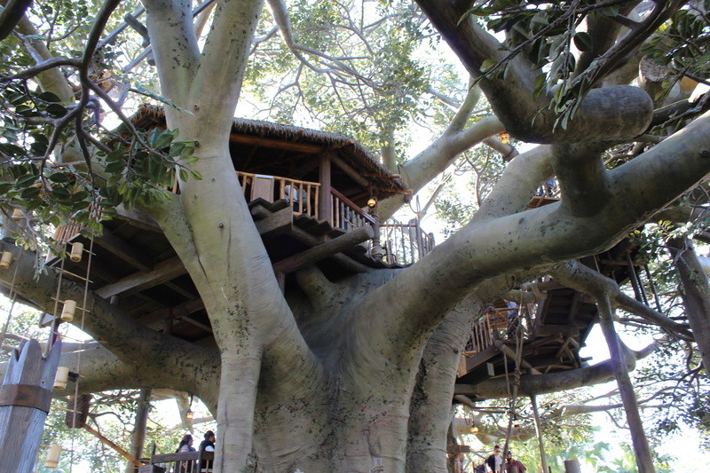 Mariage thème Disney + Voyage de Noces WDW + USO + IOA + Keys + Everglades + Miami - Page 2 Img_1370