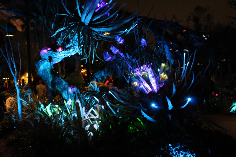 Mariage thème Disney + Voyage de Noces WDW + USO + IOA + Keys + Everglades + Miami - Page 4 Img_2141