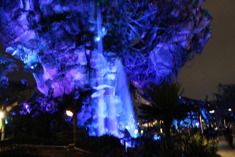 Mariage thème Disney + Voyage de Noces WDW + USO + IOA + Keys + Everglades + Miami - Page 4 Img_2146