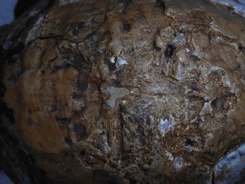 Mycose importante sur ibéra Dscn2511