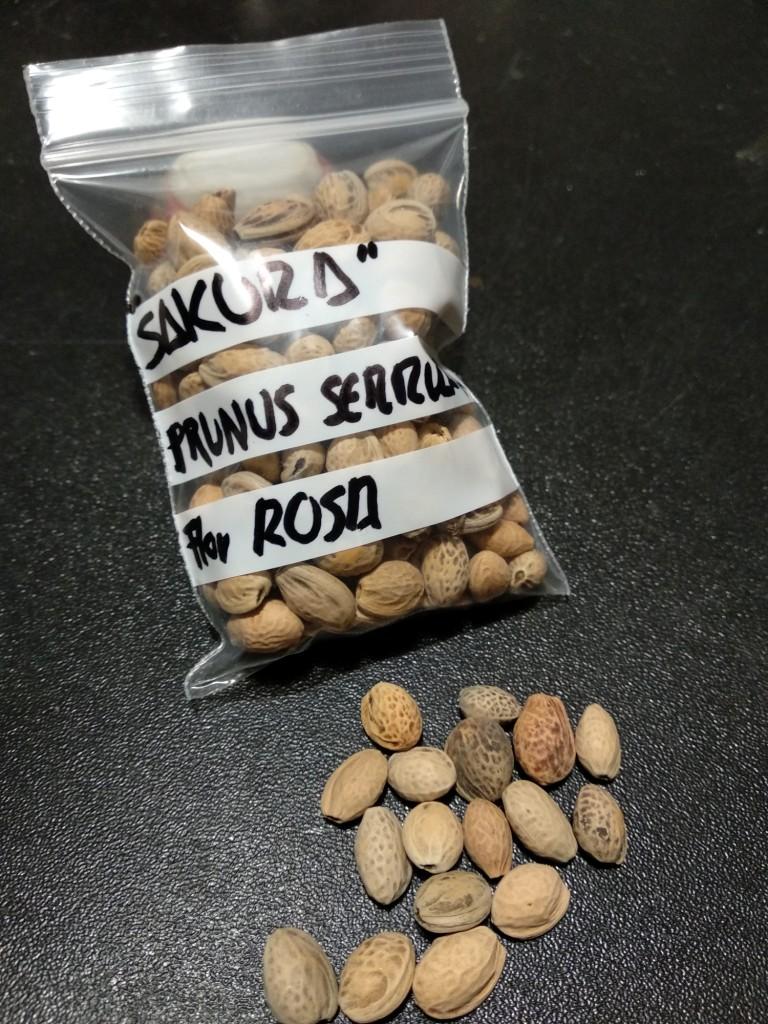 Semillas Penta, Buerge, Palmatum, Kaki, Secuoya y Sakura  Img_2011